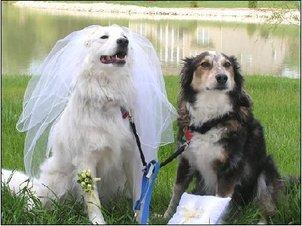 Wedddingpuppies